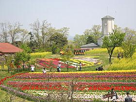 大阪のサプライズプロポーズ 京都府農業公園