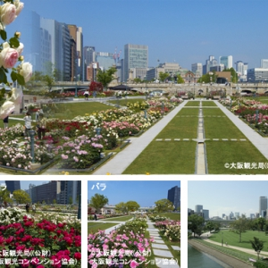 大阪のサプライズプロポーズ 大阪中之島公園