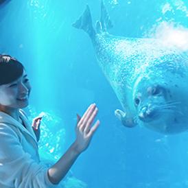 大阪のサプライズプロポーズ 海遊館