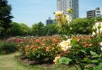 大阪のサプライズプロポーズ 靭公園