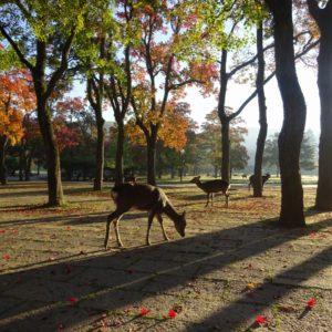 大阪のサプライズプロポーズ 奈良公園
