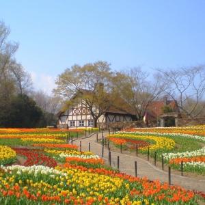 大阪のサプライズプロポーズ 岡山農業公園ドイツの森
