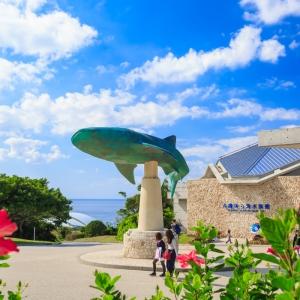 大阪のサプライズプロポーズ 沖縄美ら海水族館