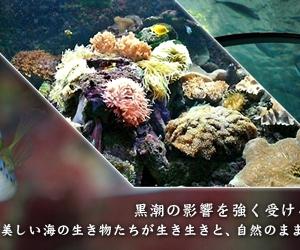 心斎橋・大阪のサプライズプロポーズ 串本海中公園