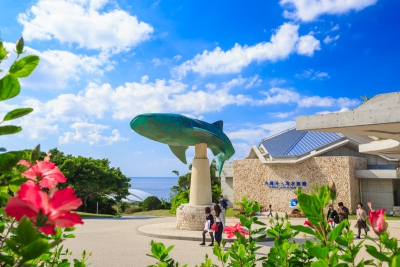 心斎橋・大阪のサプライズプロポーズ 沖縄美ら海水族館
