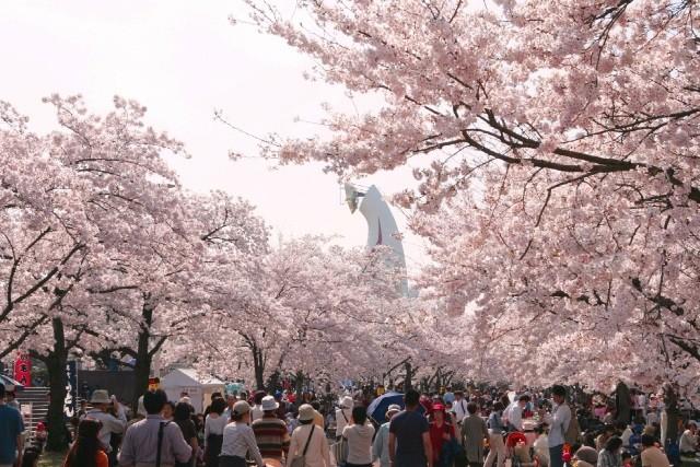 心斎橋・大阪のサプライズプロポーズ 万博記念公園、桜時期