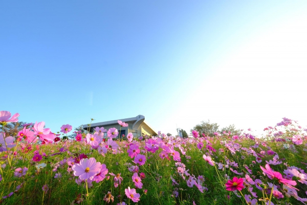 和歌山人気プロポーズスポットで鷲ヶ峰コスモスパーク