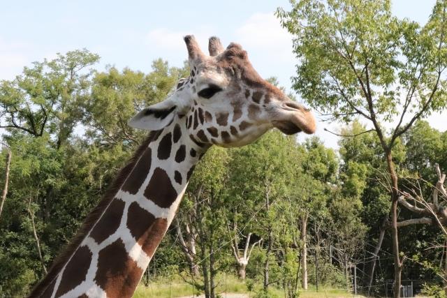 天王寺でプロポーズするなら天王寺動物園